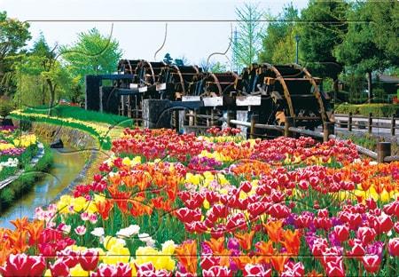 チューリップ花薫る
